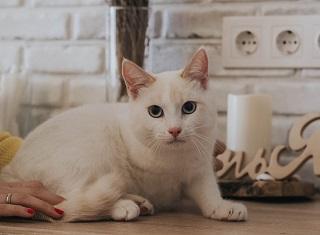 В Дубне бездомным котикам устроили фотосессию, чтобы помочь обрести дом